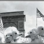Washington Square Ducks