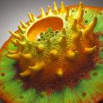 Donna_Greenberg_OliveEater_polymer:oils_20diam.