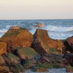 Malcolm King Birds Beach